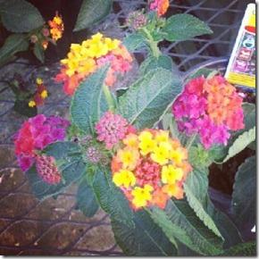 Firey flowers 7-29-12