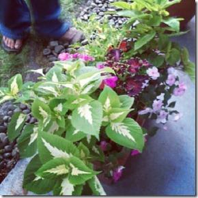 Garden box 7-29-12
