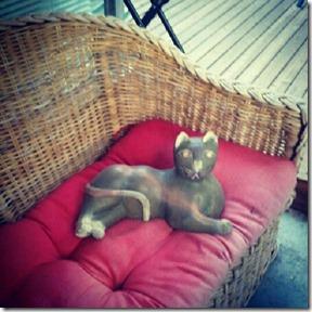Garden cat 7-29-12