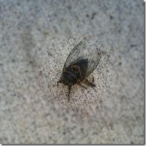 Mystery beetle 7-29-12